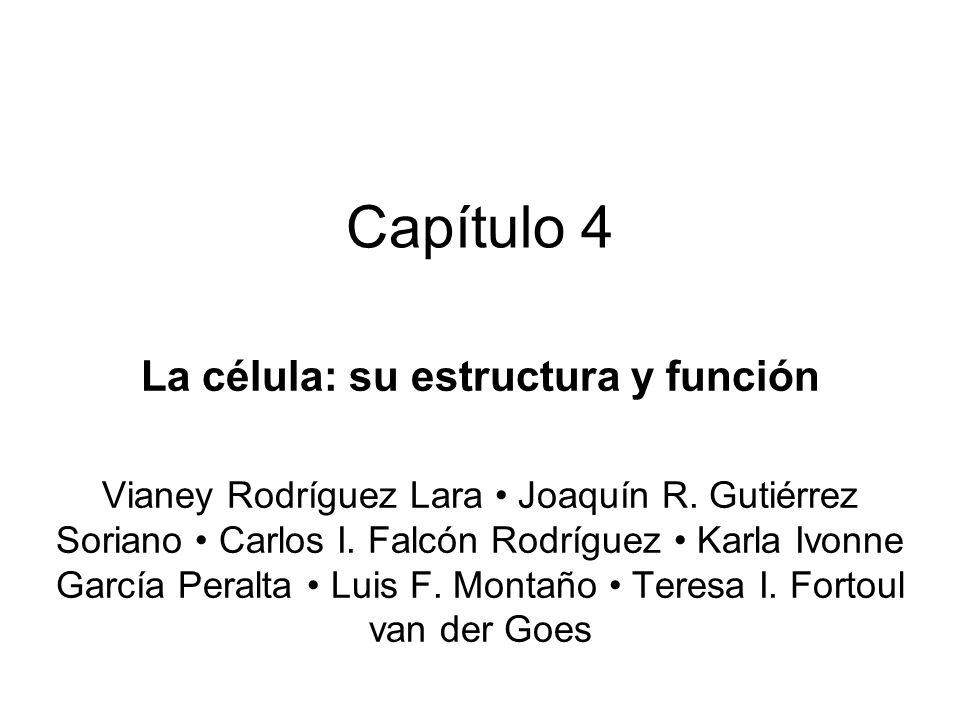 La célula: su estructura y función