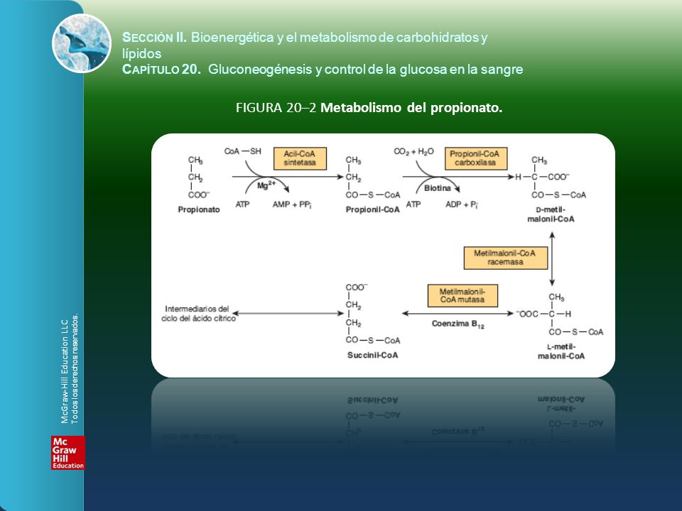 FIGURA 20–2 Metabolismo del propionato.
