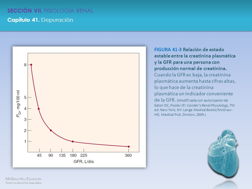 FIGURA 41-3 Relación de estado estable entre la creatinina plasmática y la GFR para una persona con producción normal de creatinina.