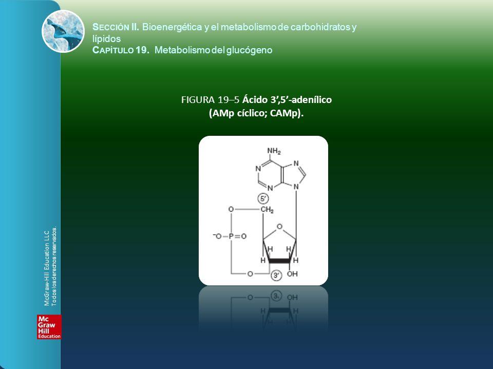 FIGURA 19–5 Ácido 3',5'-adenílico (AMp cíclico; CAMp).