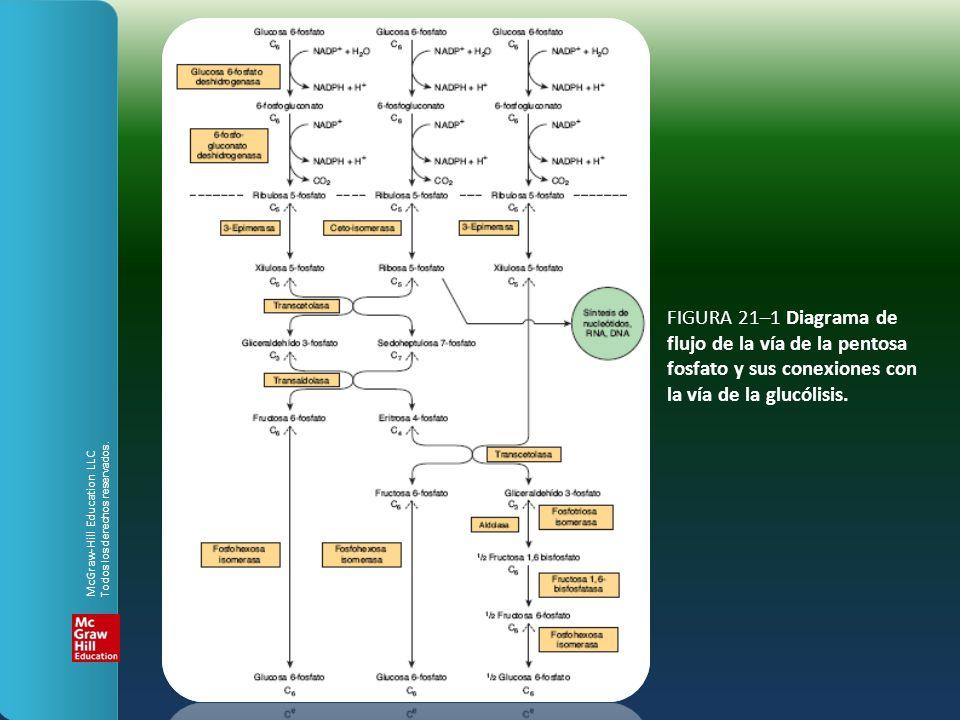 FIGURA 21–1 Diagrama de flujo de la vía de la pentosa fosfato y sus conexiones con la vía de la glucólisis.