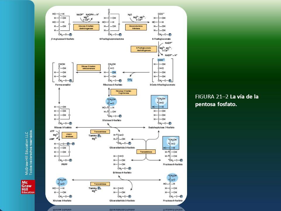 FIGURA 21–2 La vía de la pentosa fosfato.