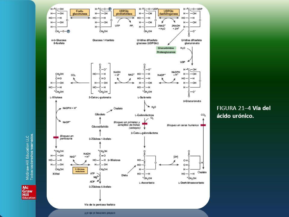 FIGURA 21–4 Vía del ácido urónico.