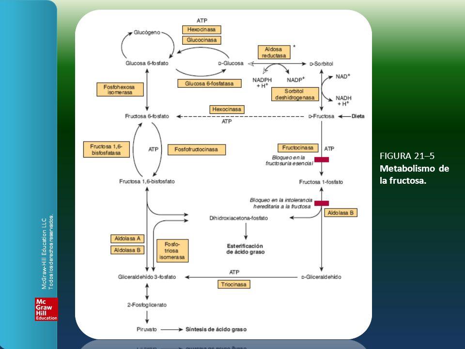 FIGURA 21–5 Metabolismo de la fructosa.