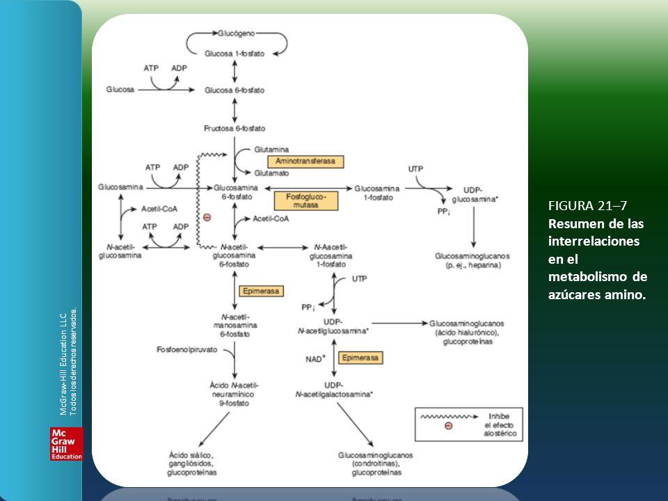 FIGURA 21–7 Resumen de las interrelaciones en el metabolismo de azúcares amino.
