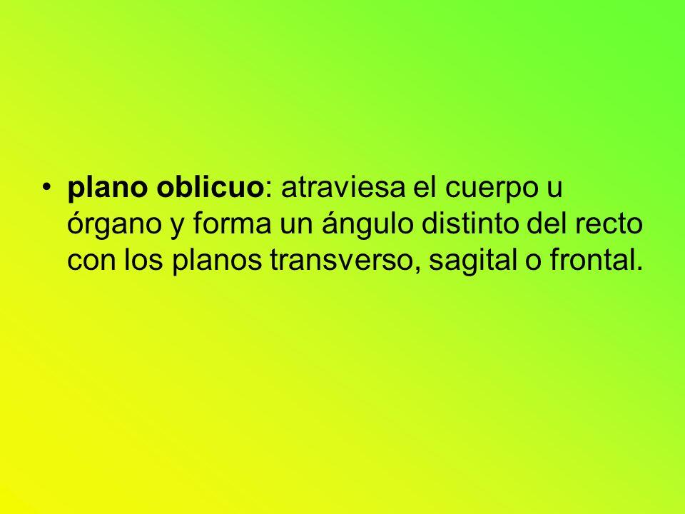 plano oblicuo: atraviesa el cuerpo u órgano y forma un ángulo distinto del recto con los planos transverso, sagital o frontal.