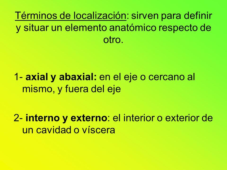 Términos de localización: sirven para definir y situar un elemento anatómico respecto de otro.