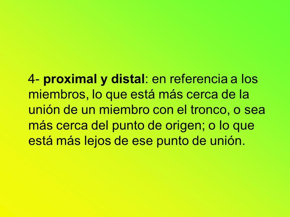 4- proximal y distal: en referencia a los miembros, lo que está más cerca de la unión de un miembro con el tronco, o sea más cerca del punto de origen; o lo que está más lejos de ese punto de unión.