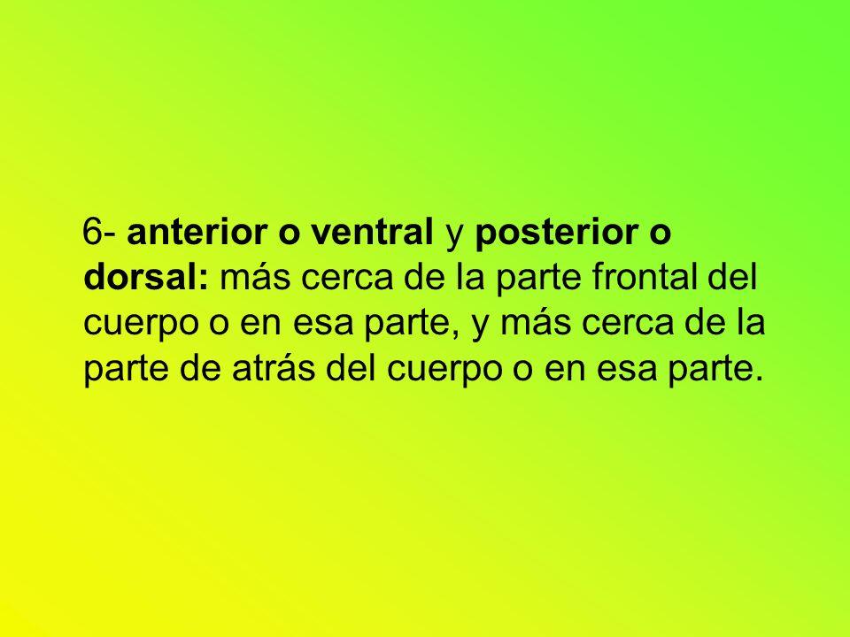 6- anterior o ventral y posterior o dorsal: más cerca de la parte frontal del cuerpo o en esa parte, y más cerca de la parte de atrás del cuerpo o en esa parte.