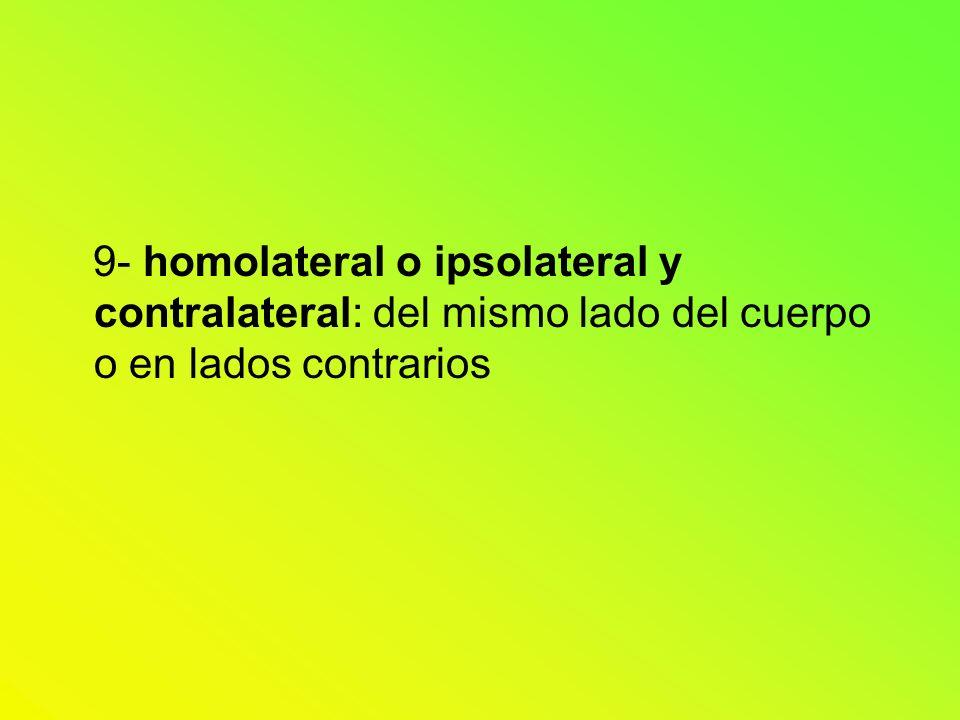 9- homolateral o ipsolateral y contralateral: del mismo lado del cuerpo o en lados contrarios