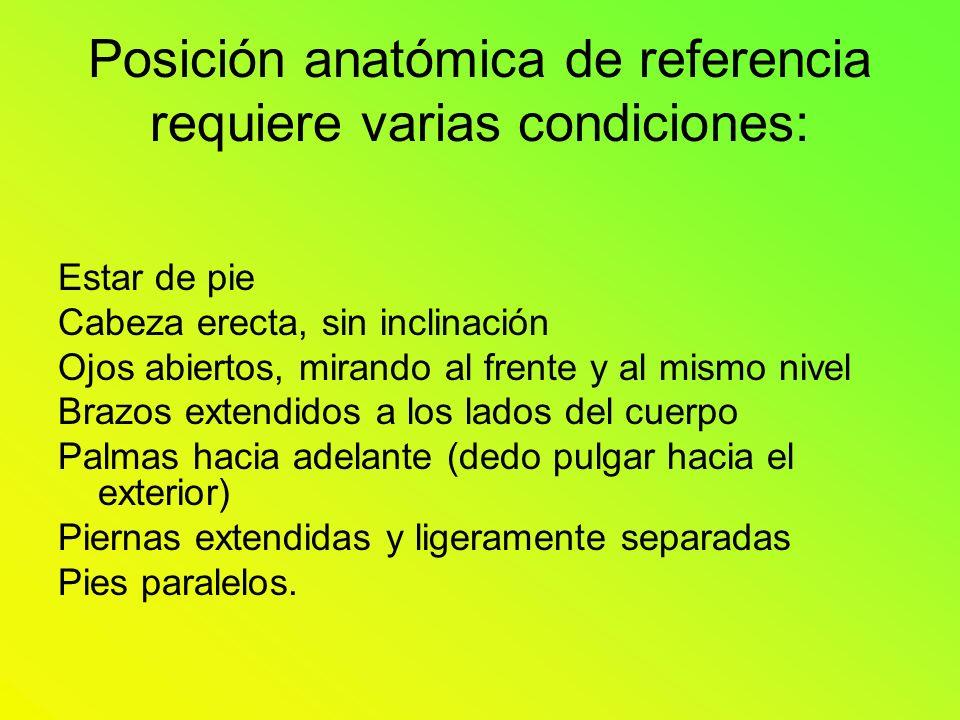 Posición anatómica de referencia requiere varias condiciones: