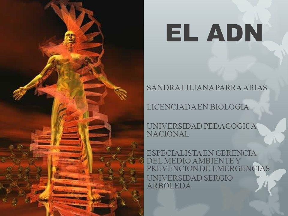 EL ADN SANDRA LILIANA PARRA ARIAS LICENCIADA EN BIOLOGIA