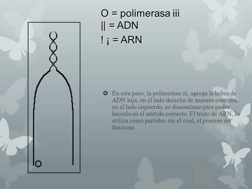 O = polimerasa iii || = ADN ! ¡ = ARN