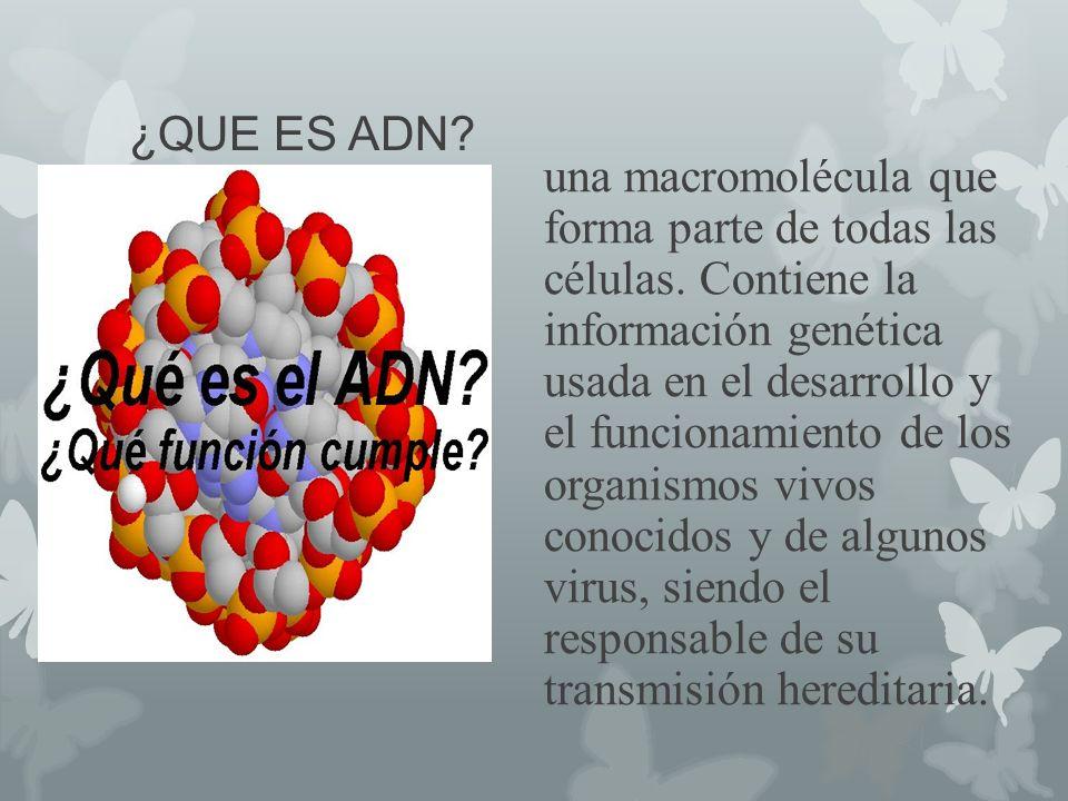 ¿QUE ES ADN