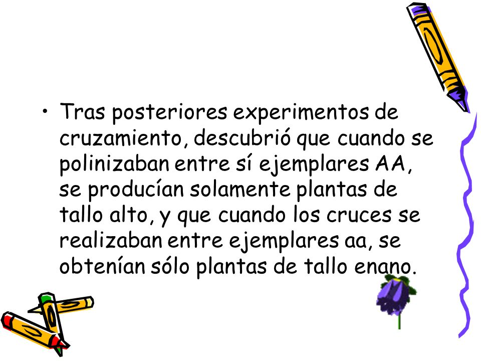 Tras posteriores experimentos de cruzamiento, descubrió que cuando se polinizaban entre sí ejemplares AA, se producían solamente plantas de tallo alto, y que cuando los cruces se realizaban entre ejemplares aa, se obtenían sólo plantas de tallo enano.