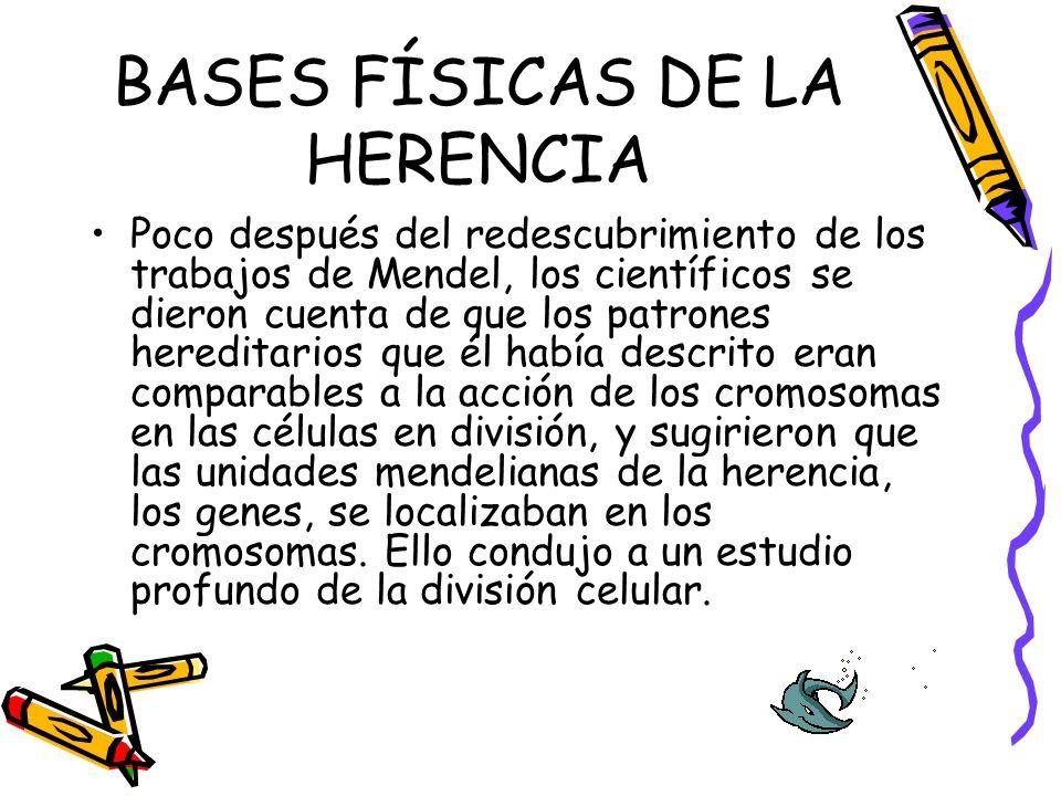 BASES FÍSICAS DE LA HERENCIA