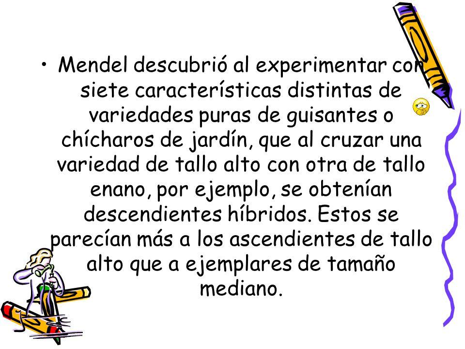 Mendel descubrió al experimentar con siete características distintas de variedades puras de guisantes o chícharos de jardín, que al cruzar una variedad de tallo alto con otra de tallo enano, por ejemplo, se obtenían descendientes híbridos.