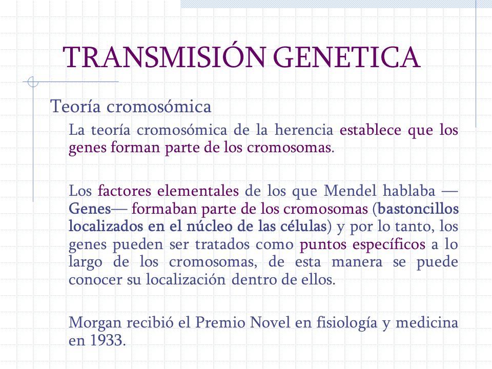 TRANSMISIÓN GENETICA Teoría cromosómica