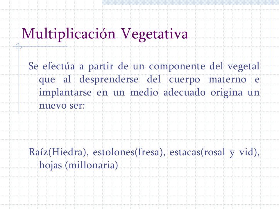 Multiplicación Vegetativa