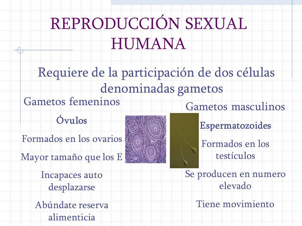 REPRODUCCIÓN SEXUAL HUMANA