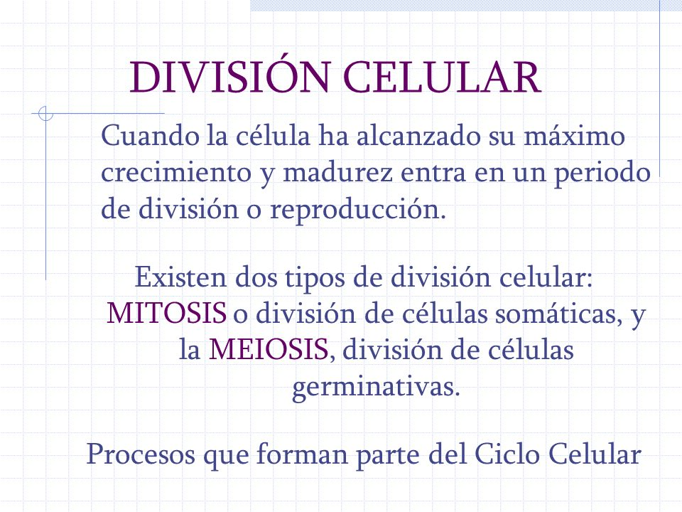 Procesos que forman parte del Ciclo Celular