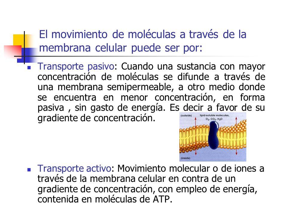 El movimiento de moléculas a través de la membrana celular puede ser por: