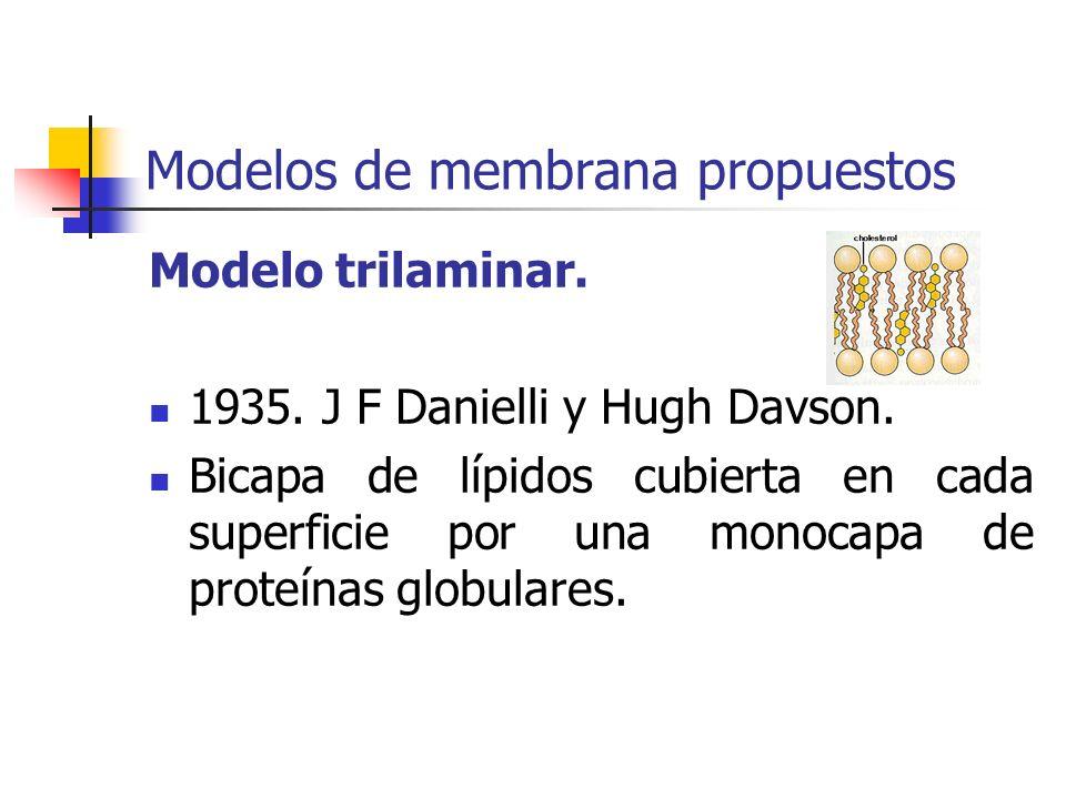 Modelos de membrana propuestos