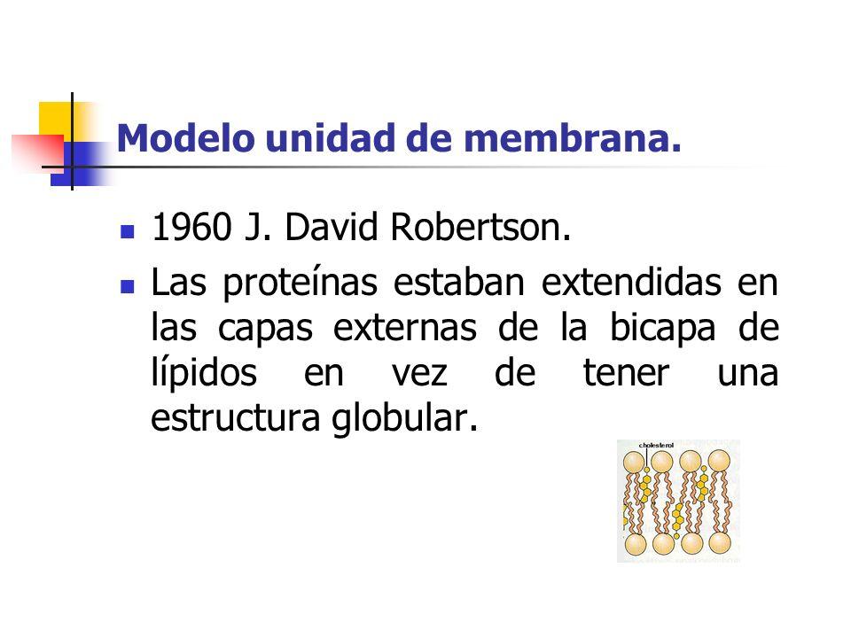 Modelo unidad de membrana.