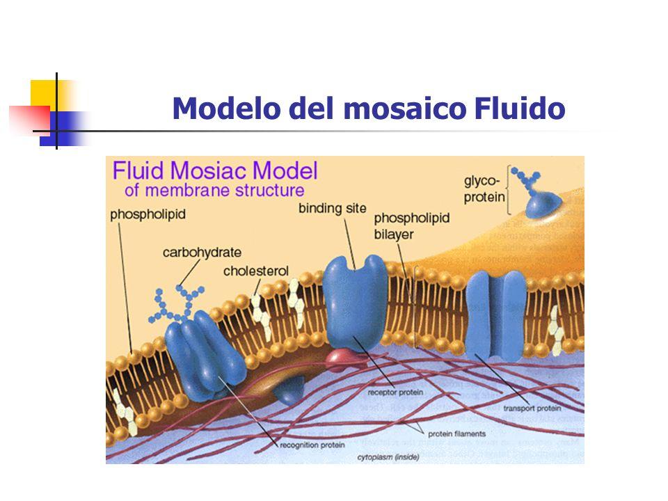 Modelo del mosaico Fluido