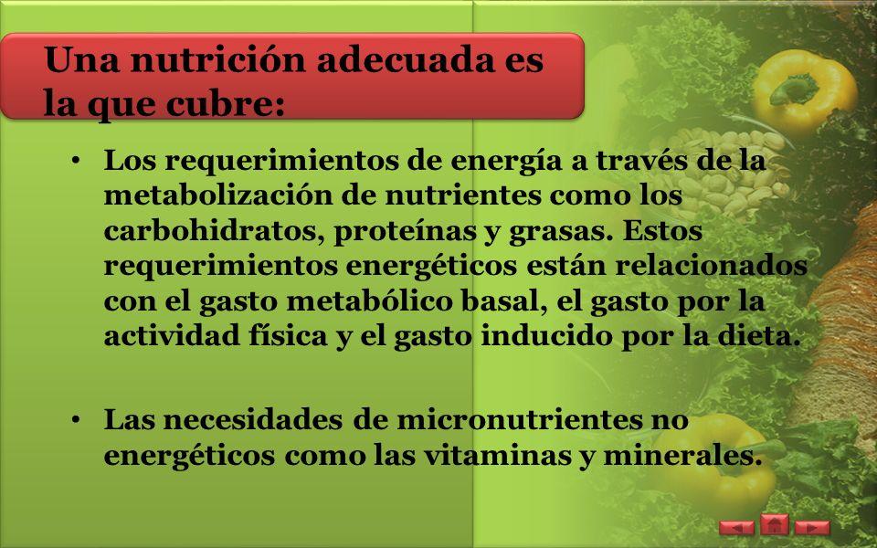 Una nutrición adecuada es la que cubre: