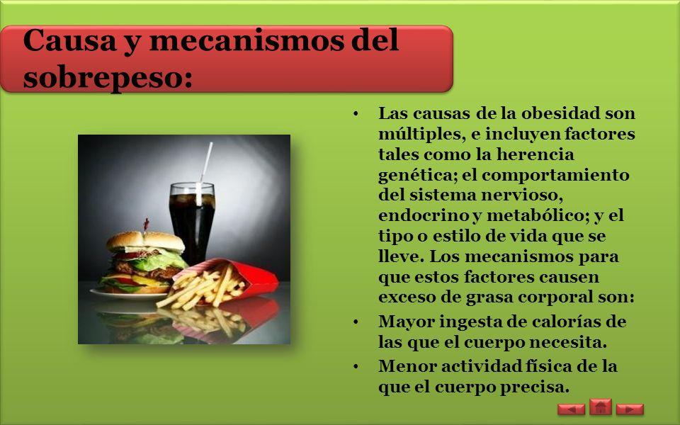 Causa y mecanismos del sobrepeso: