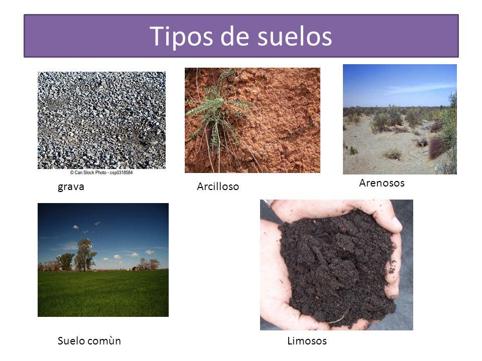 Tipos de suelos tipos de suelos fuente analizando los for Suelos y tipos de suelos