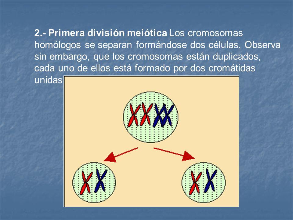 1 la reproducci n celular ppt descargar for Los nietos se separan
