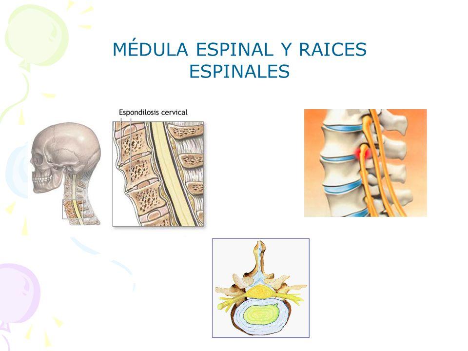 MÉDULA ESPINAL Y RAICES ESPINALES