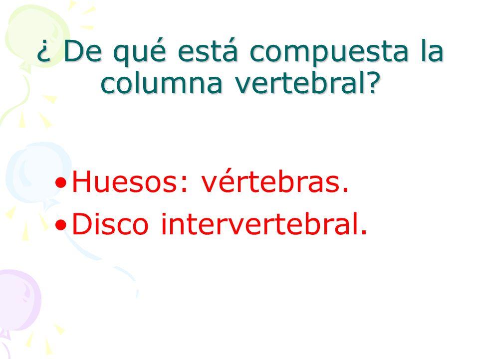 ¿ De qué está compuesta la columna vertebral