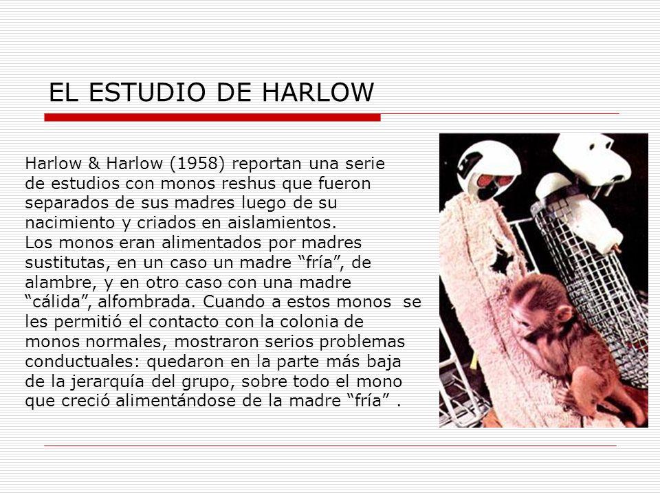 EL ESTUDIO DE HARLOW