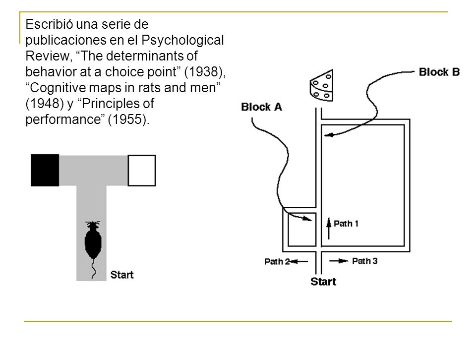 Escribió una serie de publicaciones en el Psychological Review, The determinants of behavior at a choice point (1938), Cognitive maps in rats and men (1948) y Principles of performance (1955).