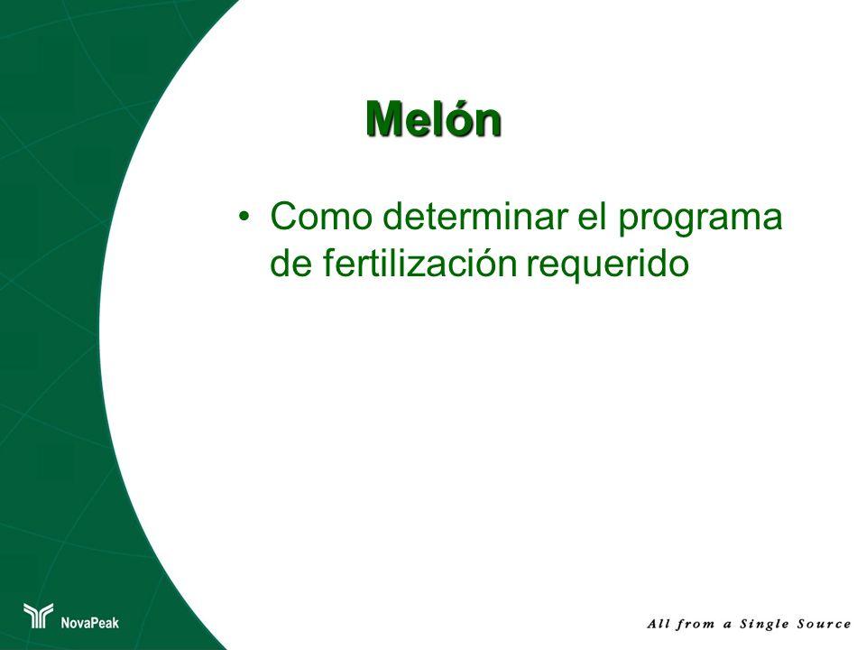 Melón Como determinar el programa de fertilización requerido