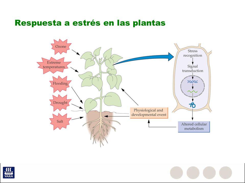 Respuesta a estrés en las plantas