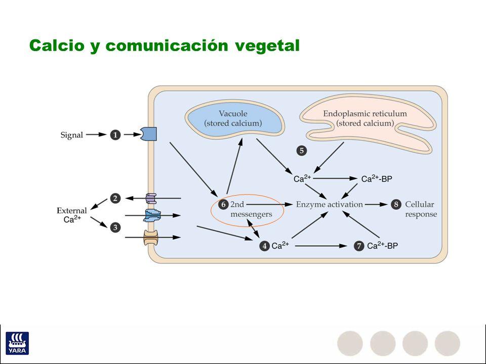 Calcio y comunicación vegetal