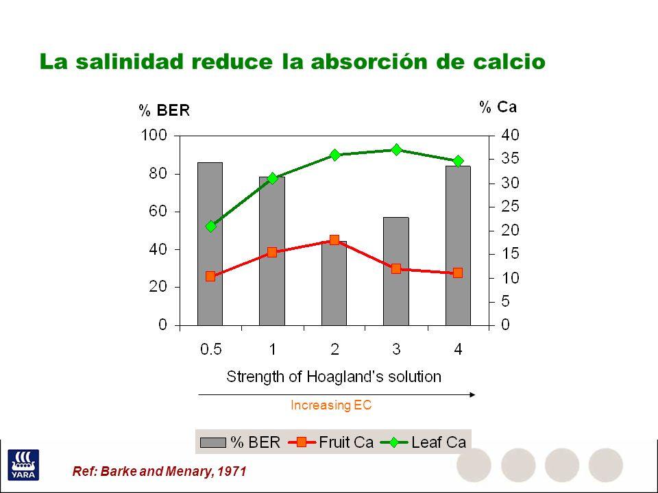 La salinidad reduce la absorción de calcio