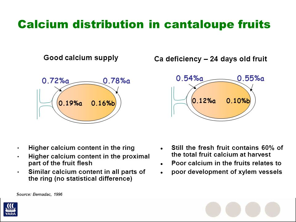 Calcium distribution in cantaloupe fruits