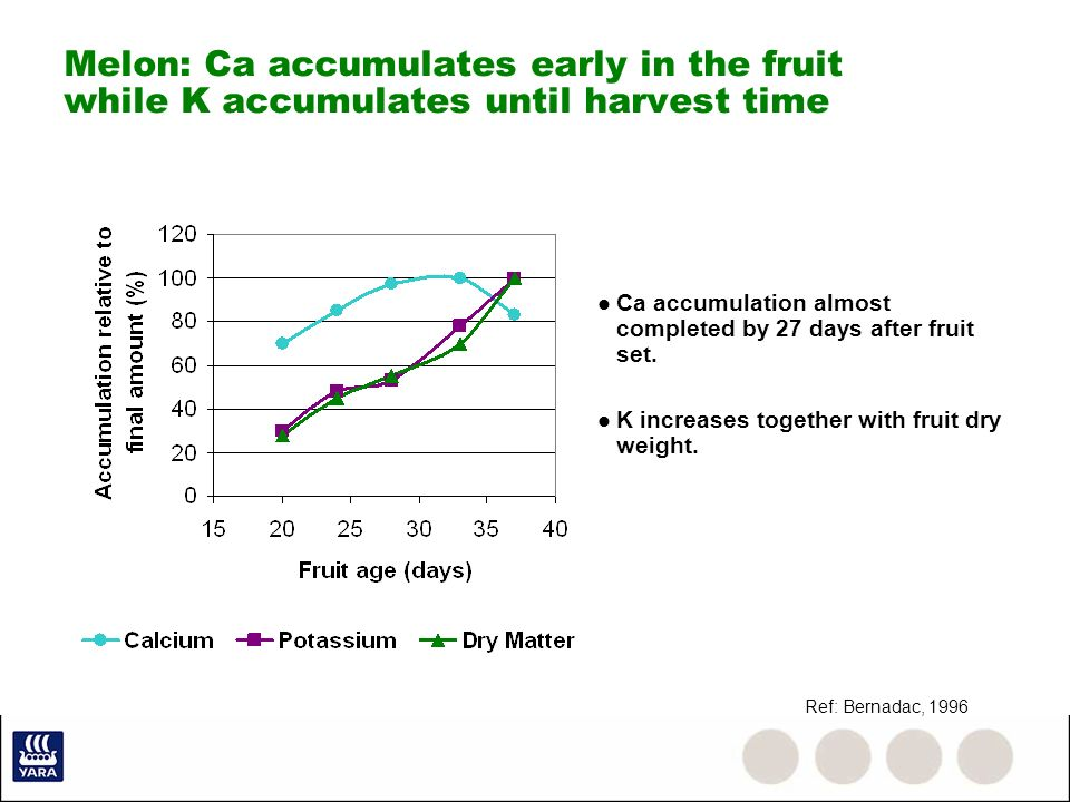 Melon: Ca accumulates early in the fruit while K accumulates until harvest time