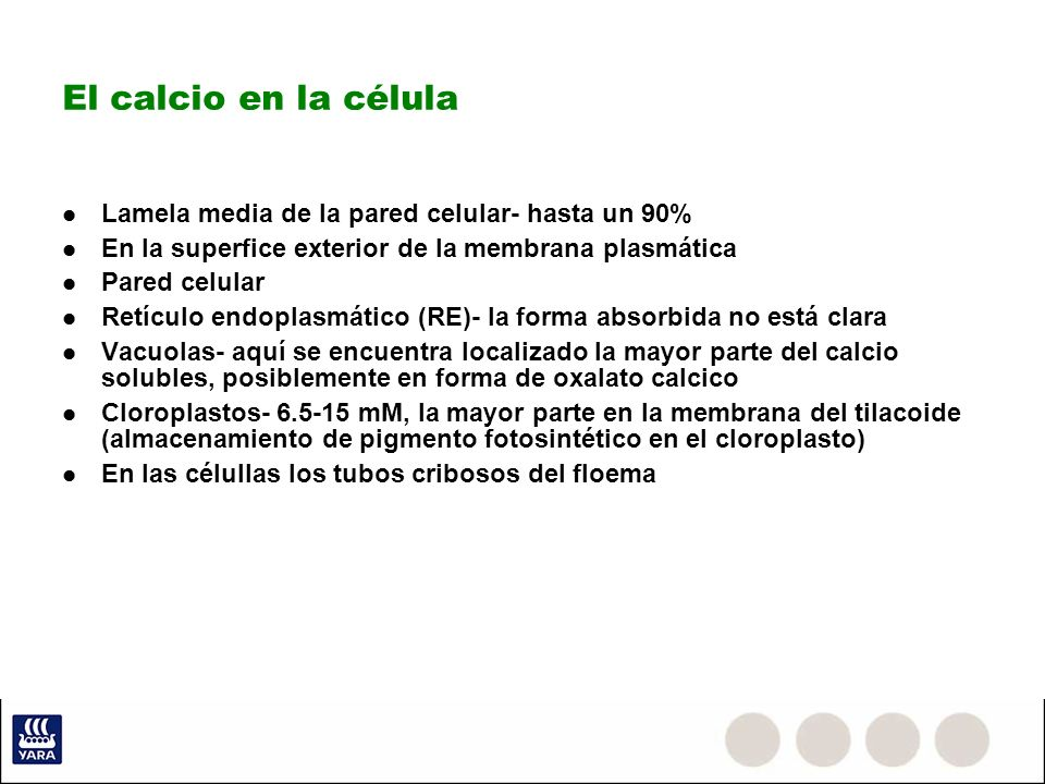 El calcio en la célula Lamela media de la pared celular- hasta un 90%
