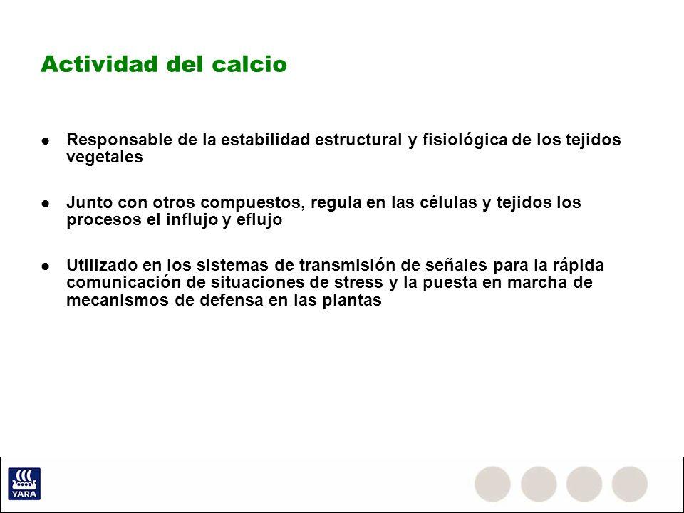 Actividad del calcio Responsable de la estabilidad estructural y fisiológica de los tejidos vegetales.