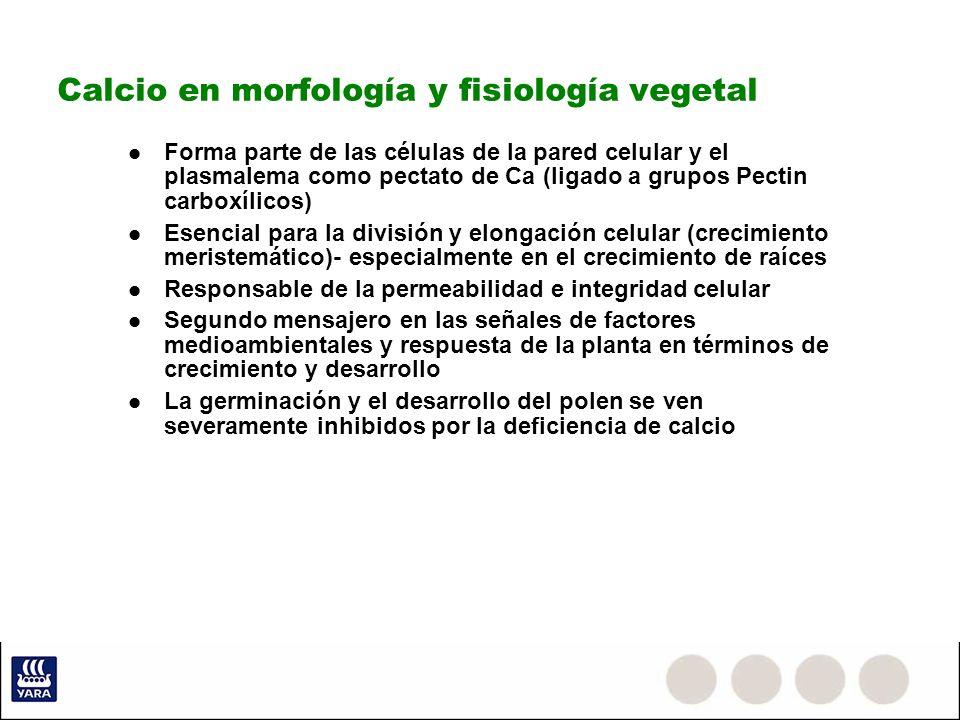 Calcio en morfología y fisiología vegetal
