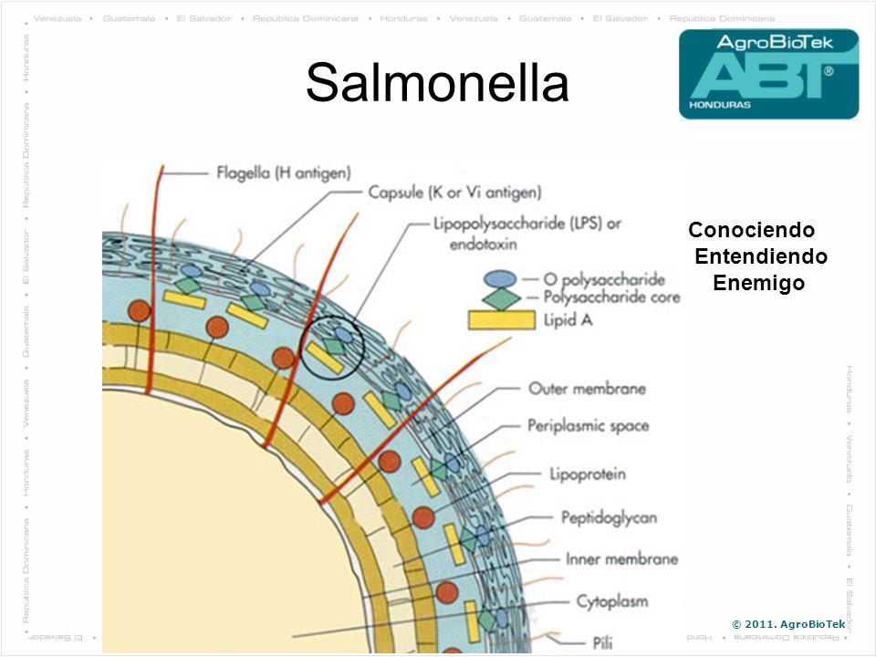 Salmonella Conociendo Entendiendo Enemigo