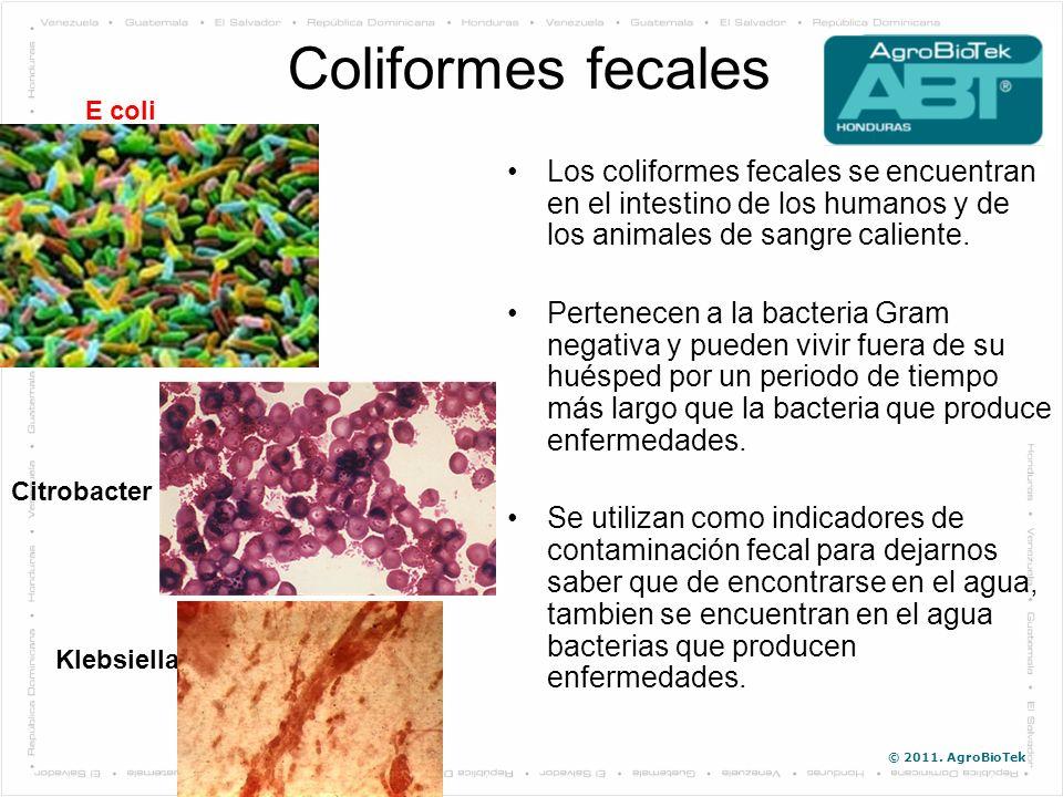 Coliformes fecales E coli. Los coliformes fecales se encuentran en el intestino de los humanos y de los animales de sangre caliente.