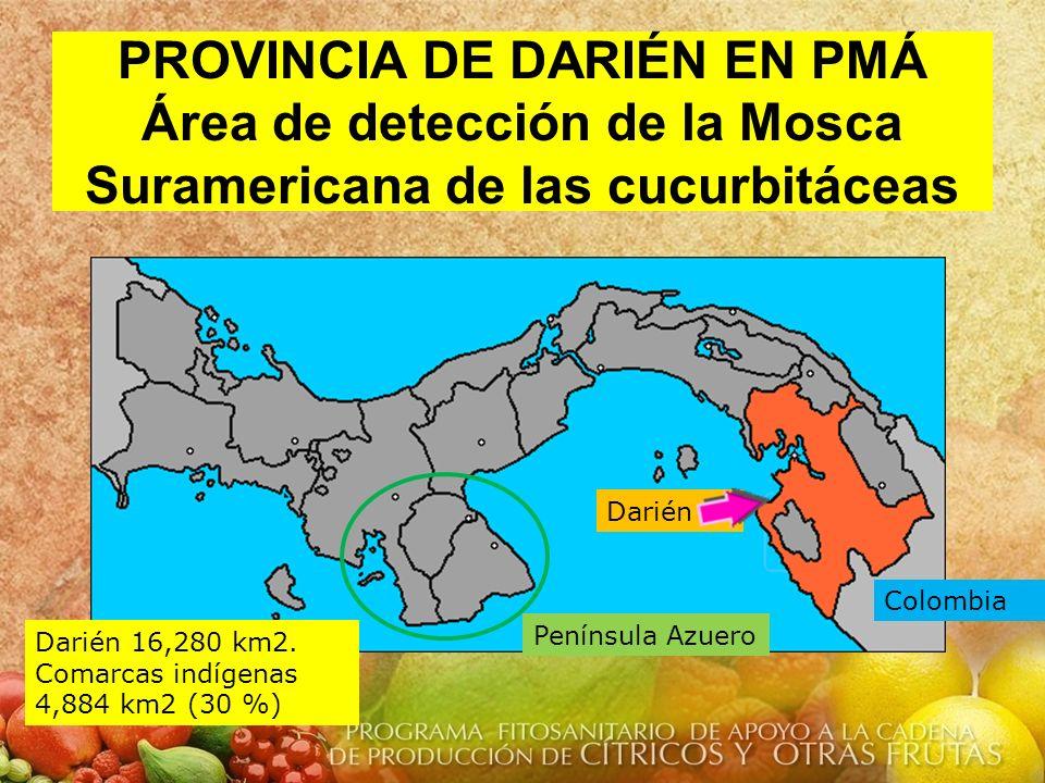 PROVINCIA DE DARIÉN EN PMÁ Área de detección de la Mosca Suramericana de las cucurbitáceas
