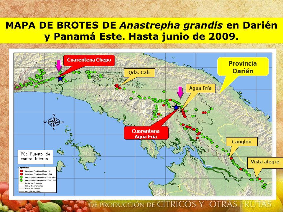 MAPA DE BROTES DE Anastrepha grandis en Darién y Panamá Este